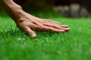 when to mow a new lawn