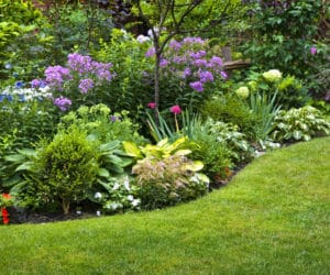 Growing a Gorgeous, Weed-Free Flower Bed
