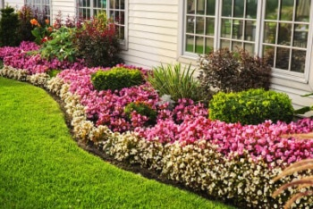 lewisville lawn care front yard