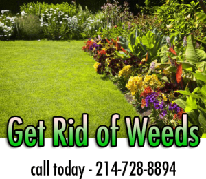 early spring lawn care tips