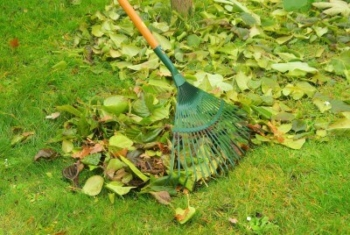 fall lawn/winter lawn leaf cleanup