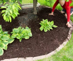 How To Fix a Flower Bed Full Of Weeds