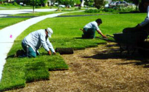 Laying Sod Whether For A New Lawn Or You Are Renovating Requires Careful Attention To Proper Handling And Installation