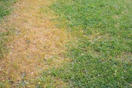 Keep Your Grass Green In Hot, Dry Climates
