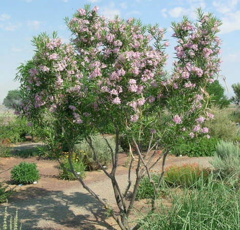 Drought Tolerant Plants for Dry Climates Like Texas with Images