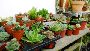 texas drought tolerant plants