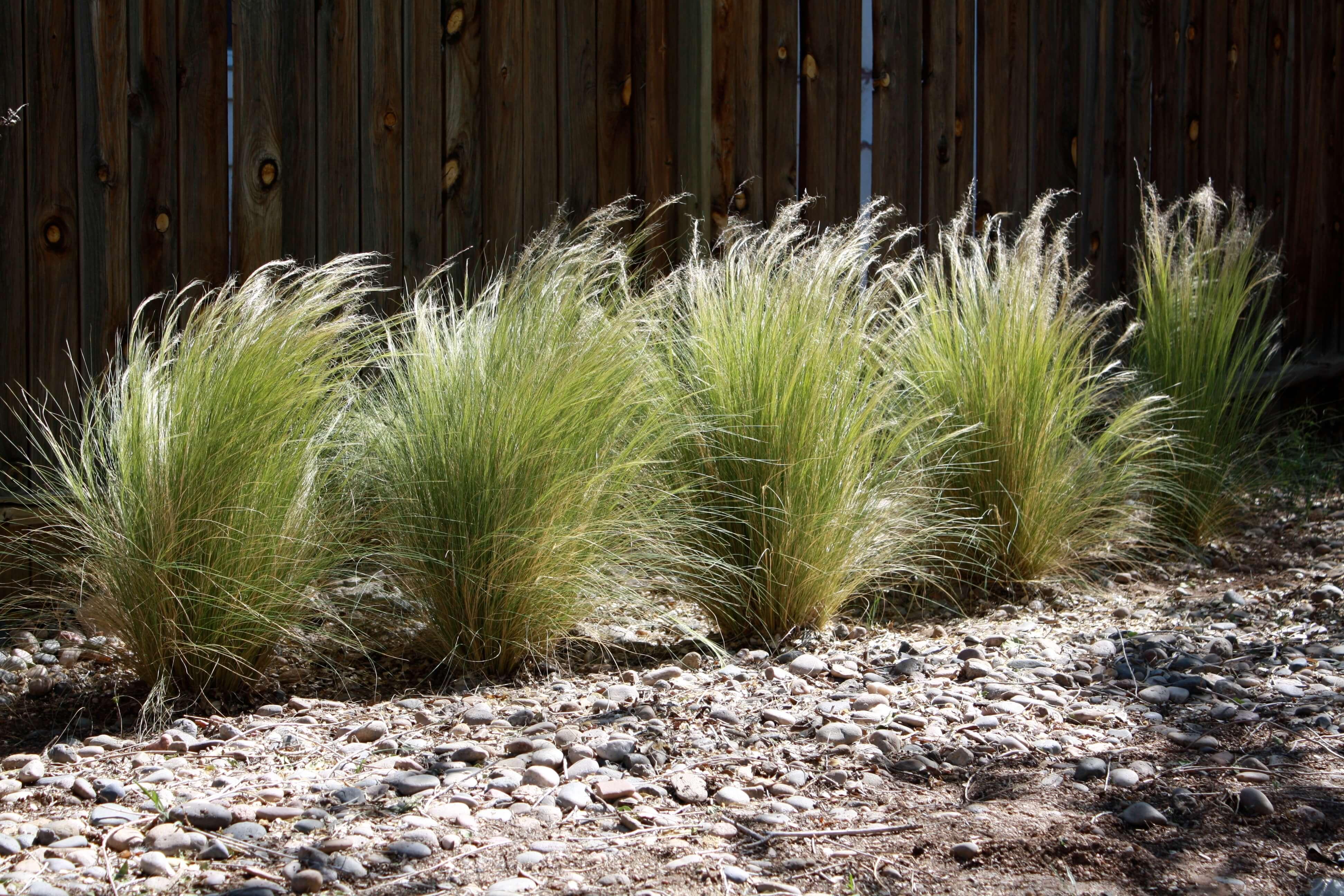 Drought Tolerant Backyard Designs