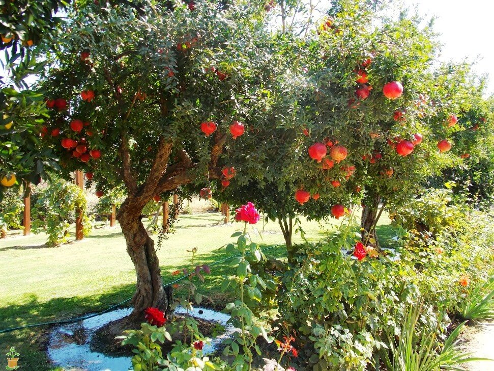 Drought tolerant plants for dry climates like texas with for Drought tolerant trees