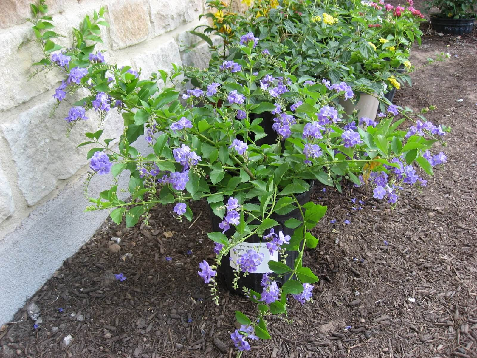 Drought Tolerant Plants For Dry Climates Like Texas With