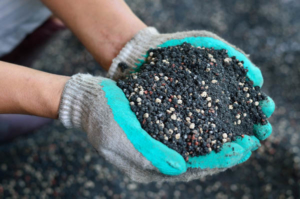 best time to add Fertilizer to the soil