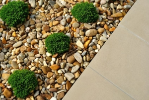 plants and rocks landscaping