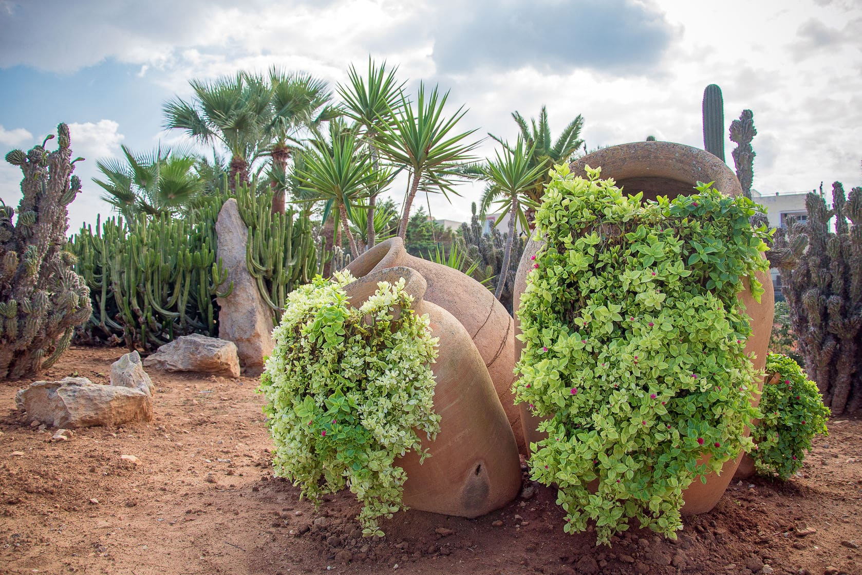 Desert rock garden ideas american hwy for Desert landscape
