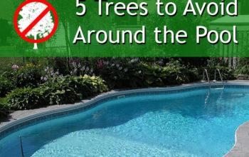 5 Trees To Avoid Around Your Pool