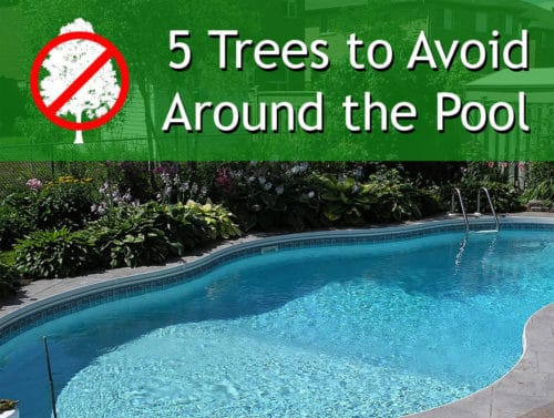 5 Trees To Avoid Ryno Lawn Care Llc
