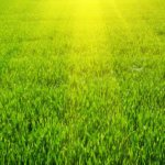 lawn mowing maintenance corinth tx