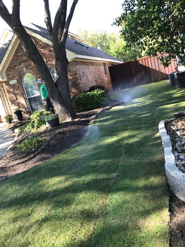 emerald zoysia sod installation