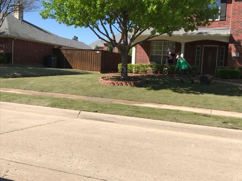 sod install zoysia grass