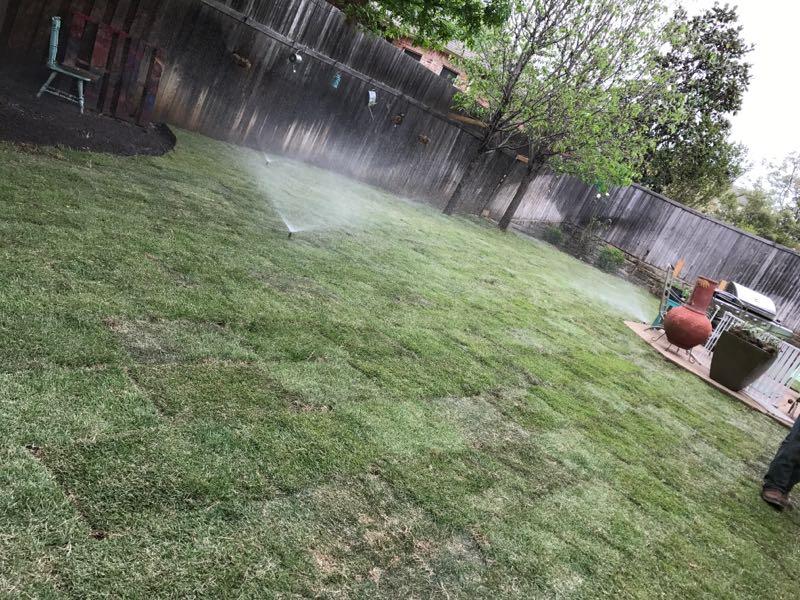 palisade zoysia sod grass installation