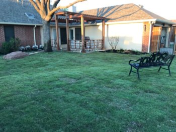 palisade zoysia sod with landscaping