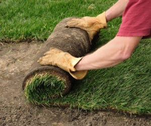 New Sod Watering Tips