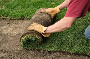 sod installation trophy club