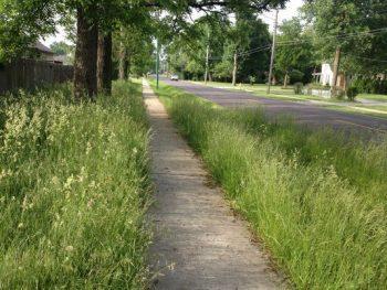 weeds overgrown