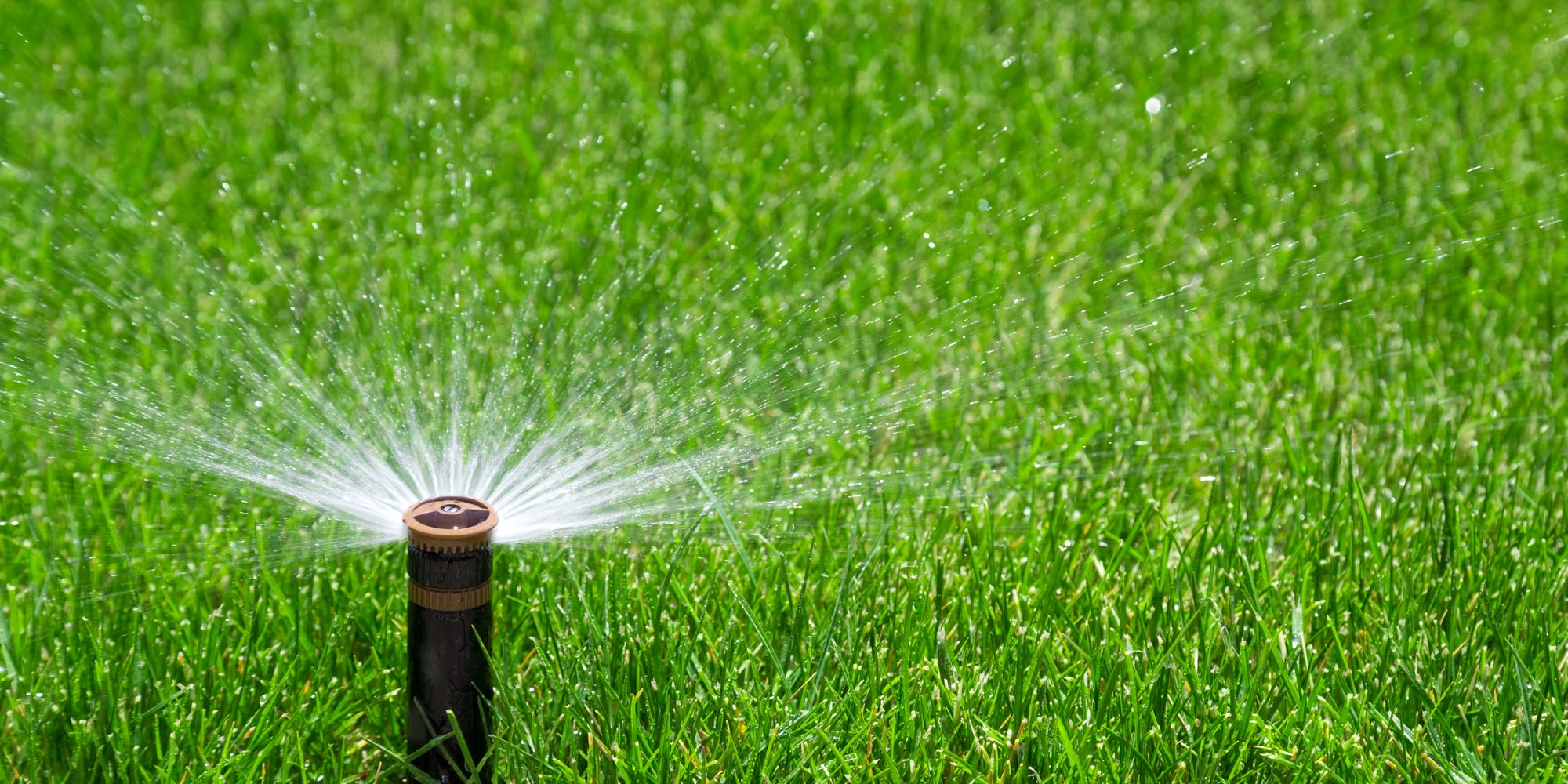 water sprinkler lawn green grass