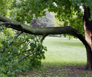 What Equipment is Needed for Tree Removal