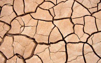 amend clay soil