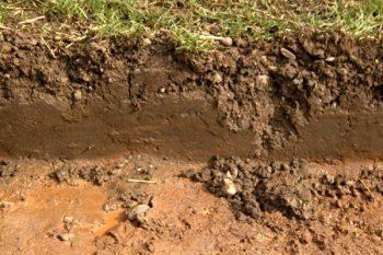 claysoil