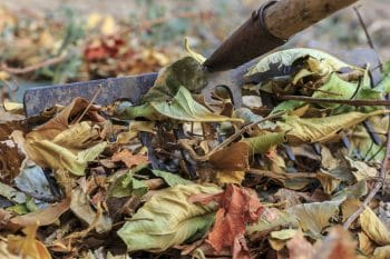 Leaf Clean Up In The Fall
