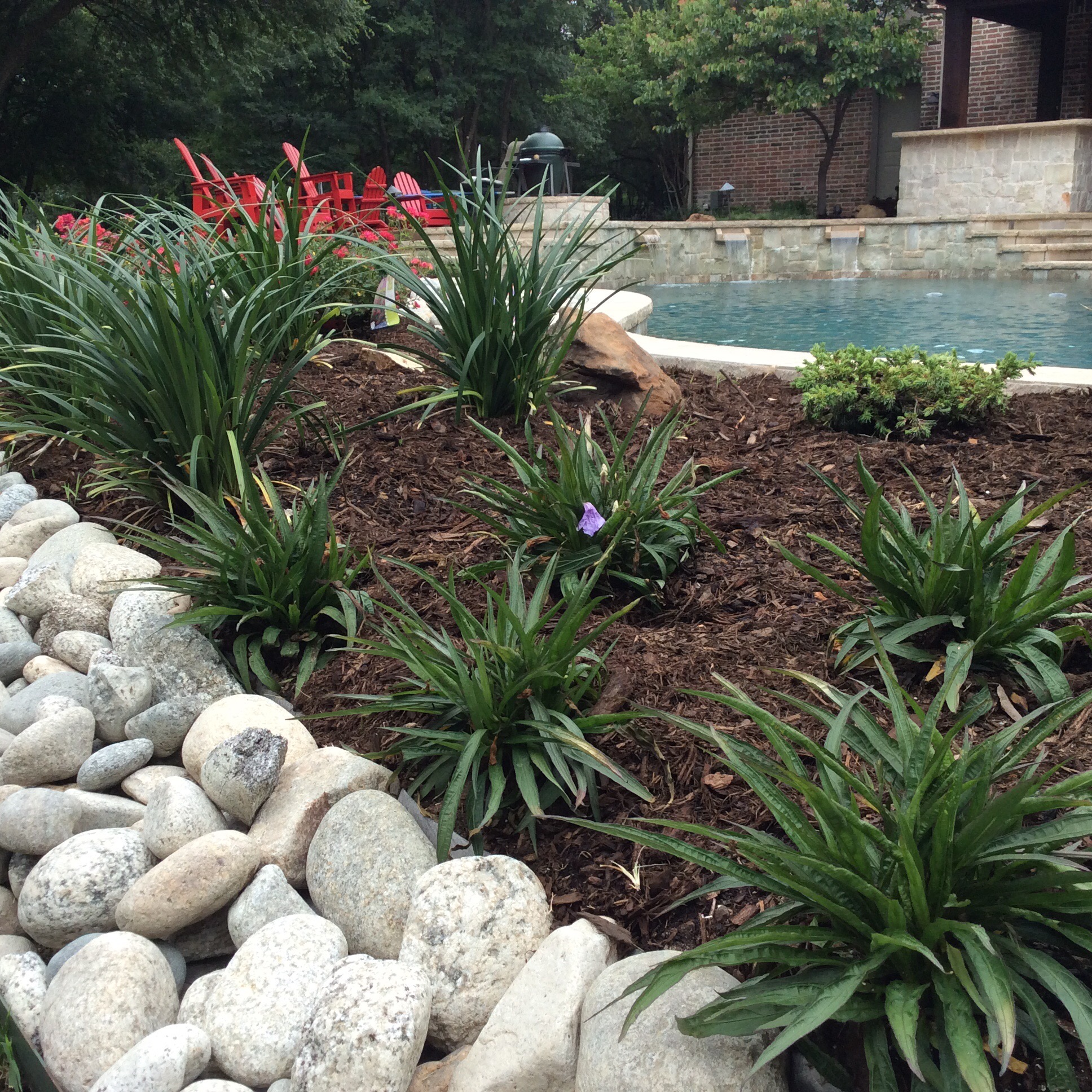 flower bed landscaping around pool