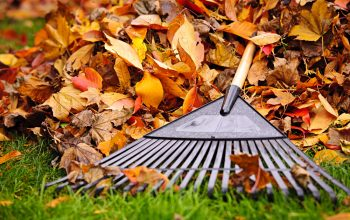Fall Lawn Care Tips for North Texas