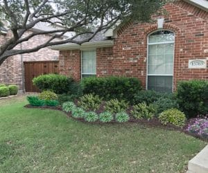 Low Maintenance Shrubs for Texas