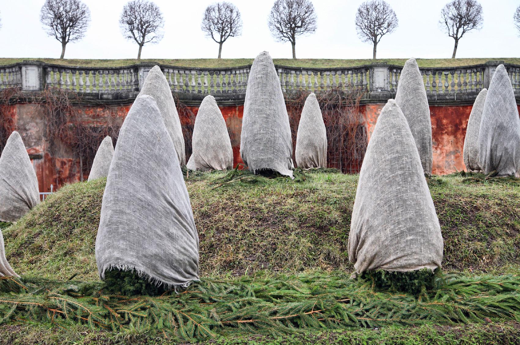 Winter Tree Protection Garden Design Ideas