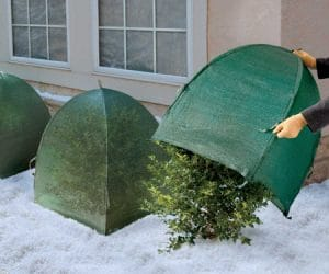 Use Winter Shrub Protection Covers