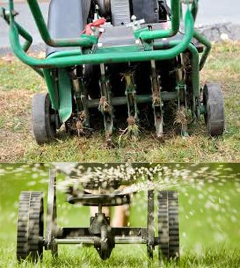 aerate-seeding
