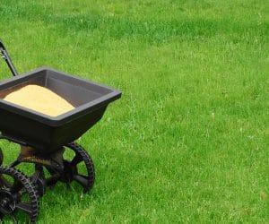 Best Fertilizer for Green Grass