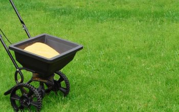 Best Fertilizer for Green Grass