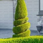 ornamental shrubs trees fertilization