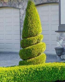 spiral-bush
