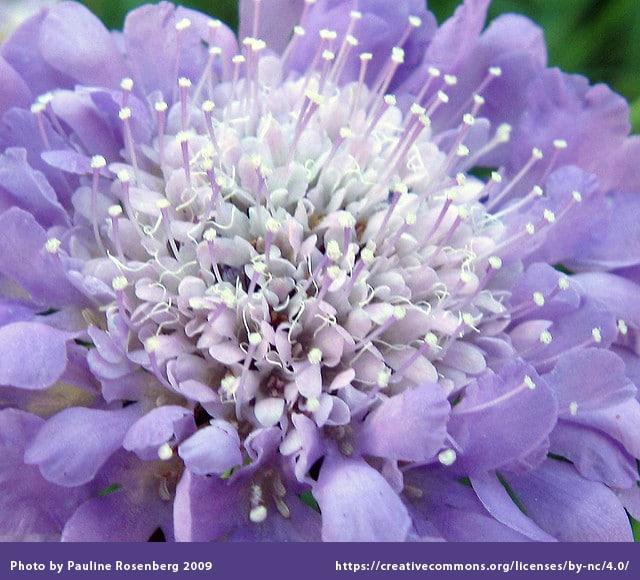 Top North Texas Perennial Flowers