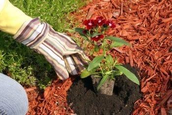 gardening prep