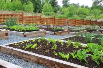 best way to water vegetable garden