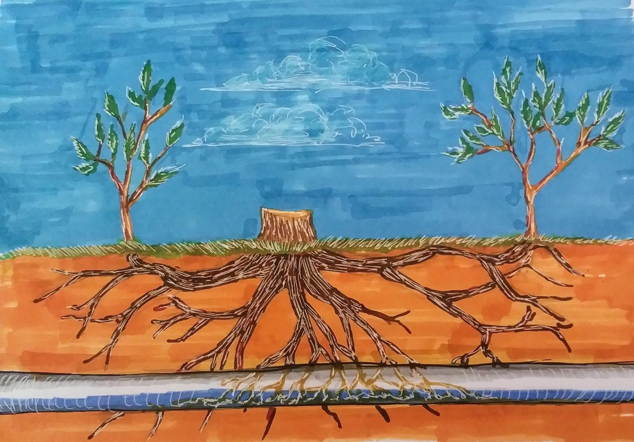 Kill Tree Roots