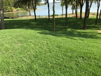 lawn with trees and lake
