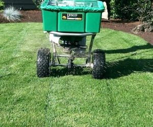 Caring for St. Augustine Grass