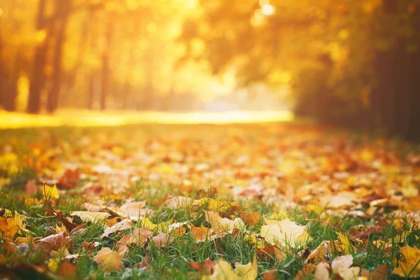 fallen autumn leaves on grass in sunny morning light