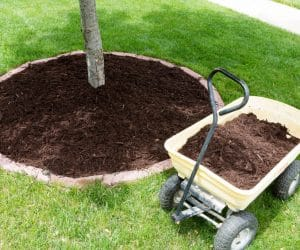 Winterizing Your Trees and Shrubs