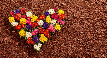 mulch with flower heart